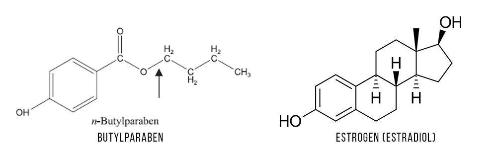 Parabens and Estrogen